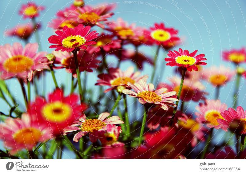 ein strauss buntes blau schön rot Pflanze Blume Freude Leben Wiese Frühling Glück Blüte lustig Park rosa außergewöhnlich verrückt