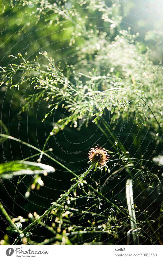 Gräserblüte Natur Pflanze Landschaft Umwelt Wärme Leben Blüte Frühling Bewegung natürlich Gras klein Stimmung glänzend Wachstum leuchten