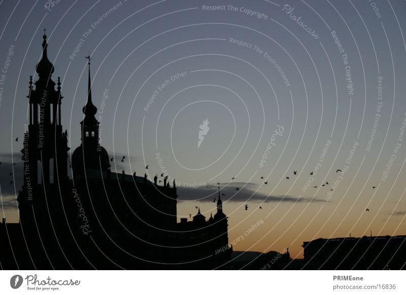 Dresden Hofkirche Vogel Architektur Silouette