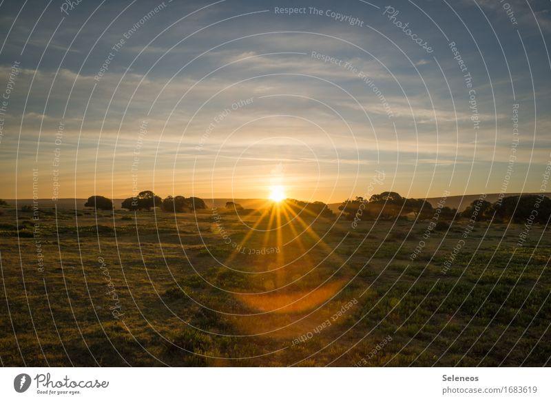 Sunset Erholung ruhig Ferien & Urlaub & Reisen Tourismus Ausflug Abenteuer Ferne Freiheit Sommer Sommerurlaub Sonne Umwelt Natur Landschaft Himmel Horizont