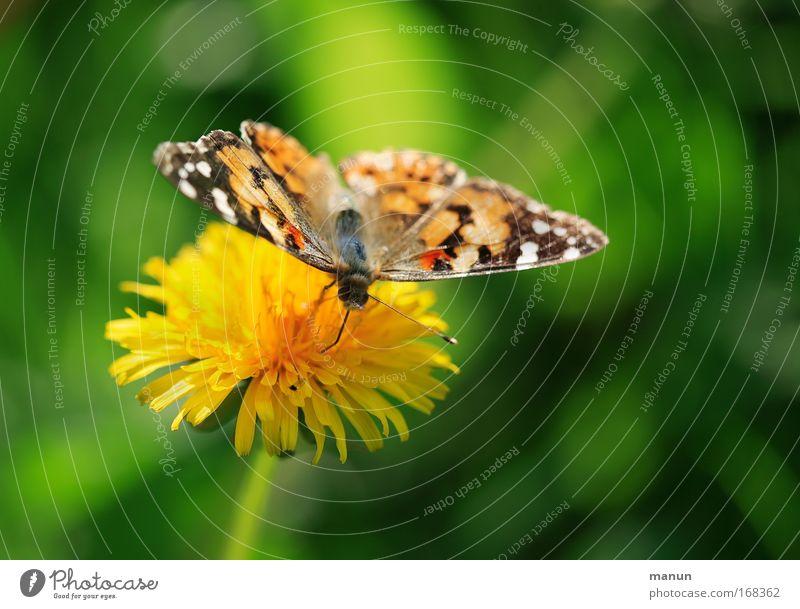Tankstopp Natur grün Sommer Tier ruhig Erholung Umwelt gelb Ernährung Wiese Frühling Blüte Park Zufriedenheit Wildtier Fröhlichkeit