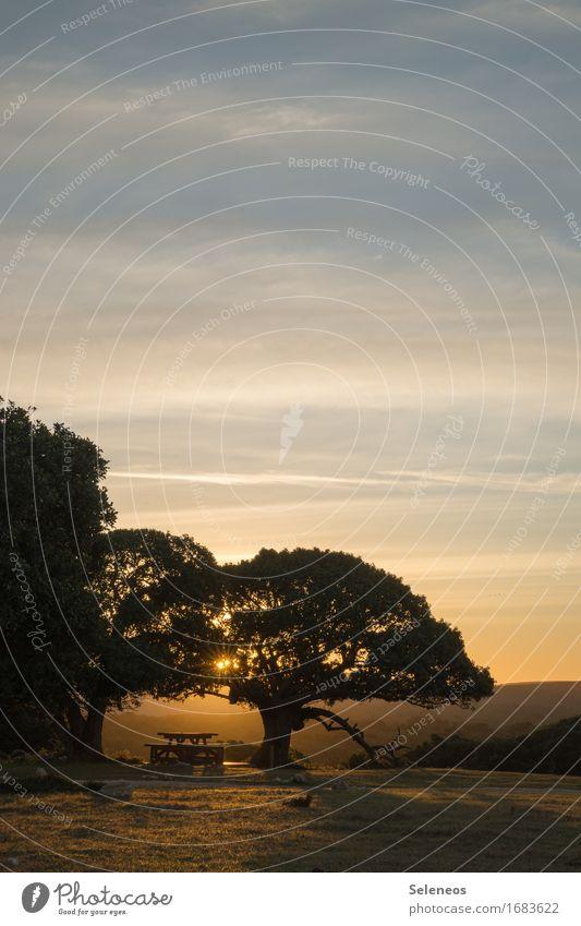 nettes Plätzchen harmonisch Zufriedenheit Erholung ruhig Ausflug Sommer Sonne Umwelt Natur Landschaft Himmel Sonnenlicht Baum Bank Picknick Farbfoto
