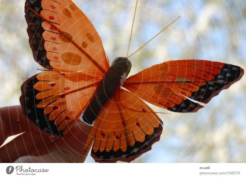 Schmetterling du kleines Ding... Natur Pflanze Tier Umwelt fliegen Schmetterling Grünpflanze