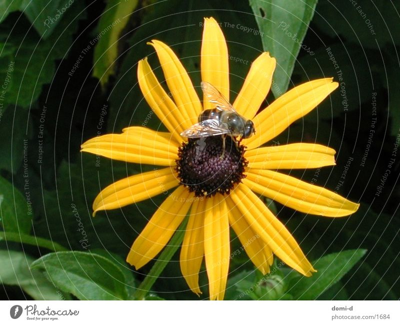 Blume & Biene Tier Insekt Schweiz Sommer Frühling gelb Natur