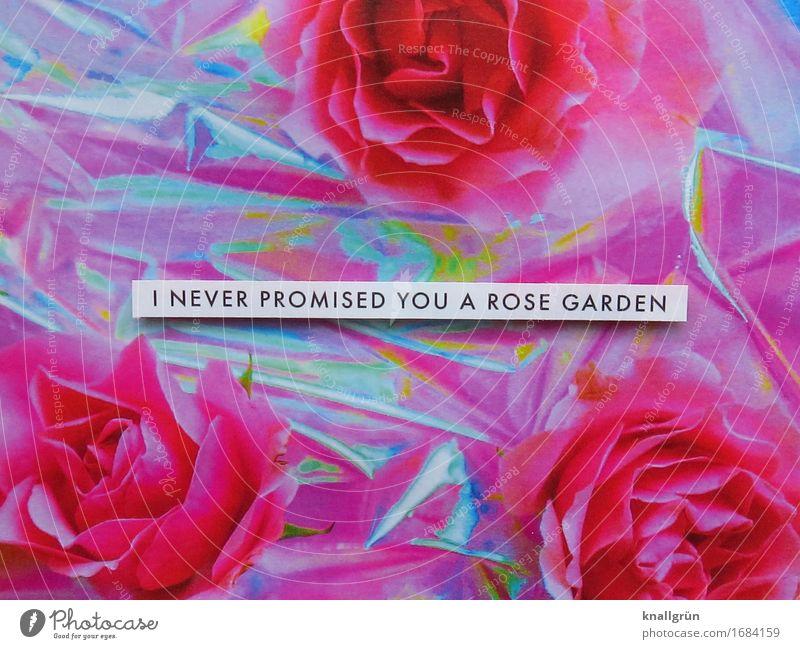 I NEVER PROMISED YOU A ROSE GARDEN Pflanze Rose Schriftzeichen Schilder & Markierungen Kommunizieren eckig rosa schwarz silber weiß Gefühle Stimmung Akzeptanz