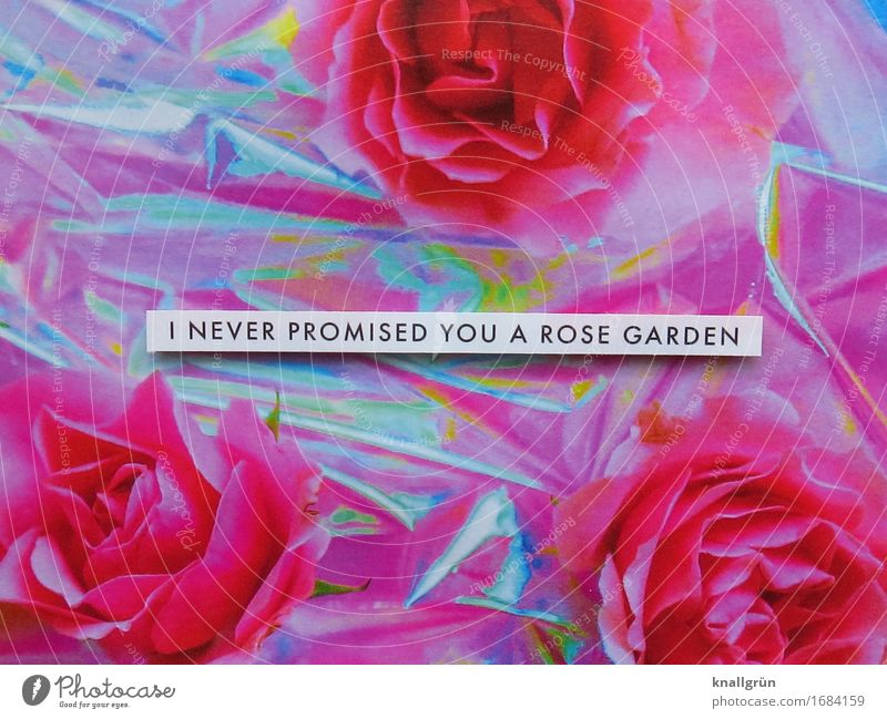 I NEVER PROMISED YOU A ROSE GARDEN Pflanze weiß schwarz Traurigkeit Liebe Gefühle Stimmung rosa Schriftzeichen Schilder & Markierungen Kommunizieren Neugier