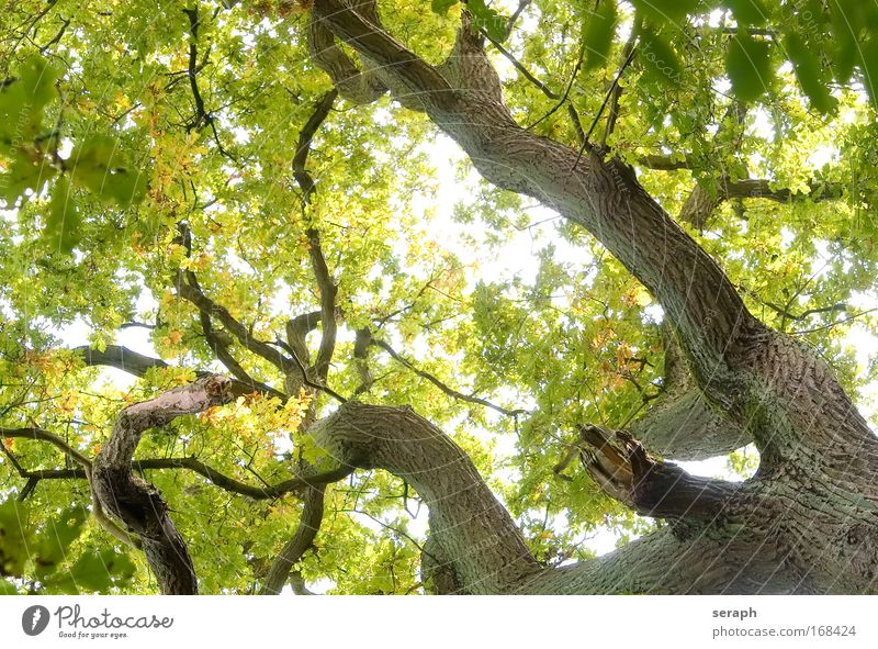 Günes Netzwerk Baum Blatt Wald Wachstum Ast Frieden antik Vernetzung Geäst Atmosphäre Labyrinth