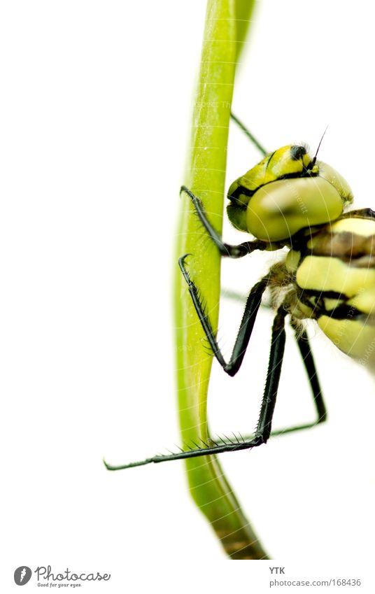 Hold me in your Arms Natur grün schön Tier Gras fliegen Wildtier außergewöhnlich natürlich ästhetisch bedrohlich Technik & Technologie festhalten fantastisch