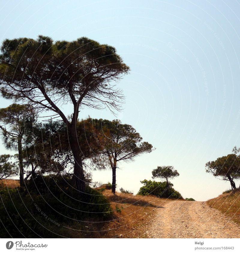 der Weg... Natur Himmel weiß Baum grün blau Pflanze Sommer ruhig schwarz Einsamkeit Wege & Pfade Wärme Landschaft Umwelt hoch