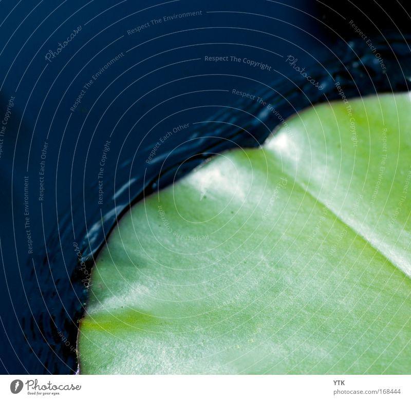 Froschlandeplatz Natur Wasser grün blau Pflanze Sommer Blatt Leben kalt Bewegung Wellen glänzend Design ästhetisch einfach Idylle