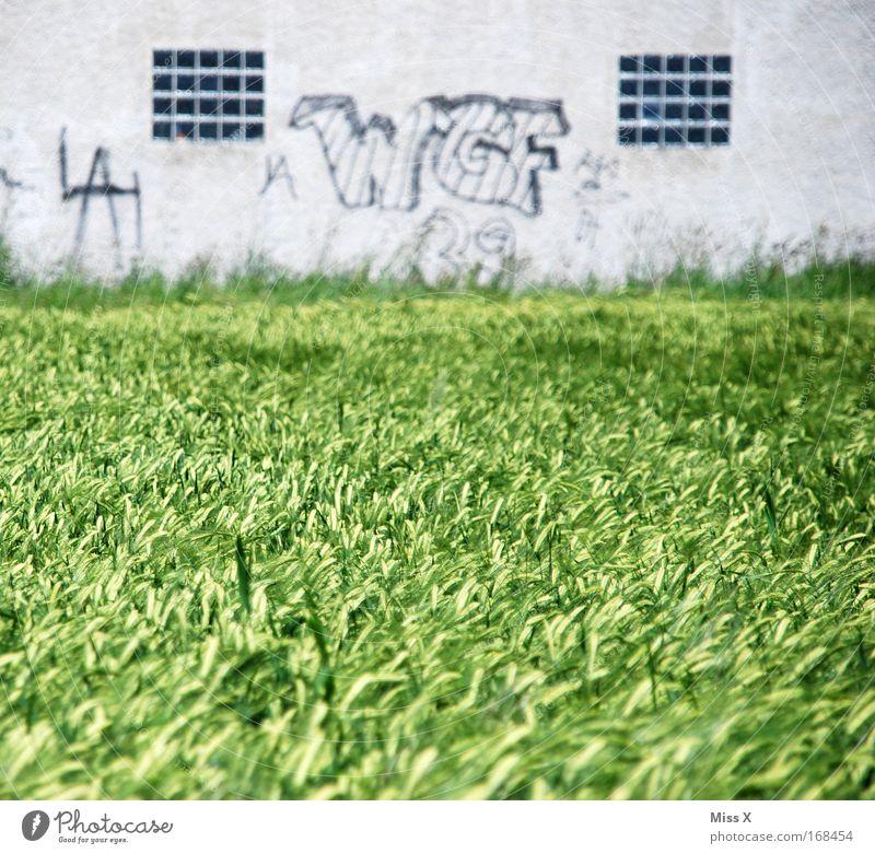 W G F WEIZEN & Graue Fassade Natur Fenster Mauer Graffiti Fassade Vergänglichkeit Landwirtschaft Justizvollzugsanstalt Gitter Weizen Kornfeld Innenhof Weizenfeld