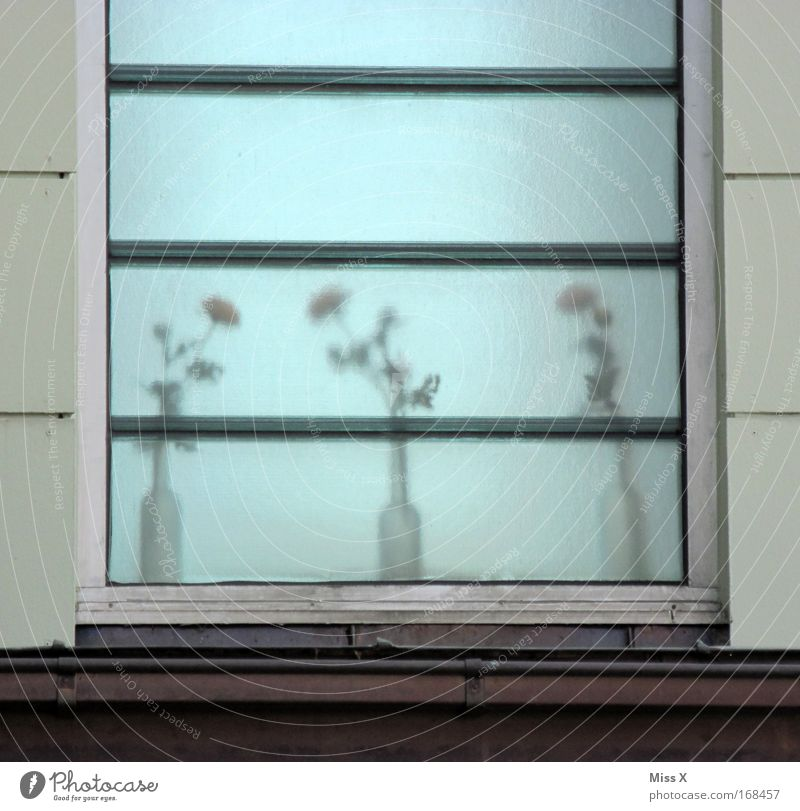 Milchglas Blume Pflanze Haus Fenster grau dreckig geheimnisvoll Vase verdeckt unsichtbar Glasscheibe Dachrinne Topfpflanze Blumenvase