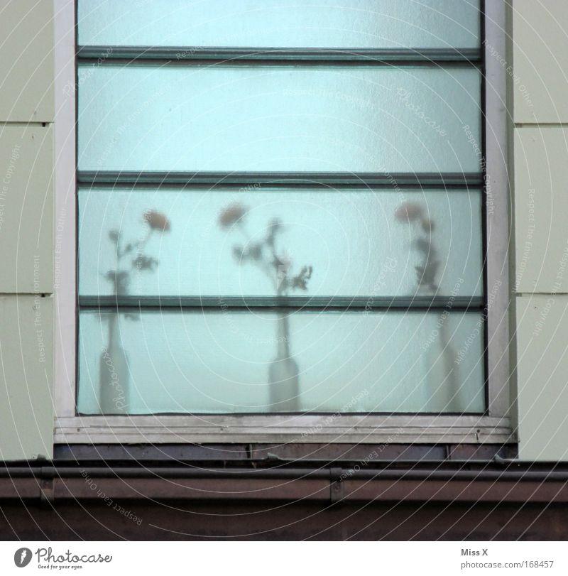 Milchglas Gedeckte Farben Außenaufnahme Menschenleer Unschärfe Pflanze Topfpflanze Haus Fenster dreckig grau Blume Blumenvase Glasscheibe unsichtbar Dachrinne