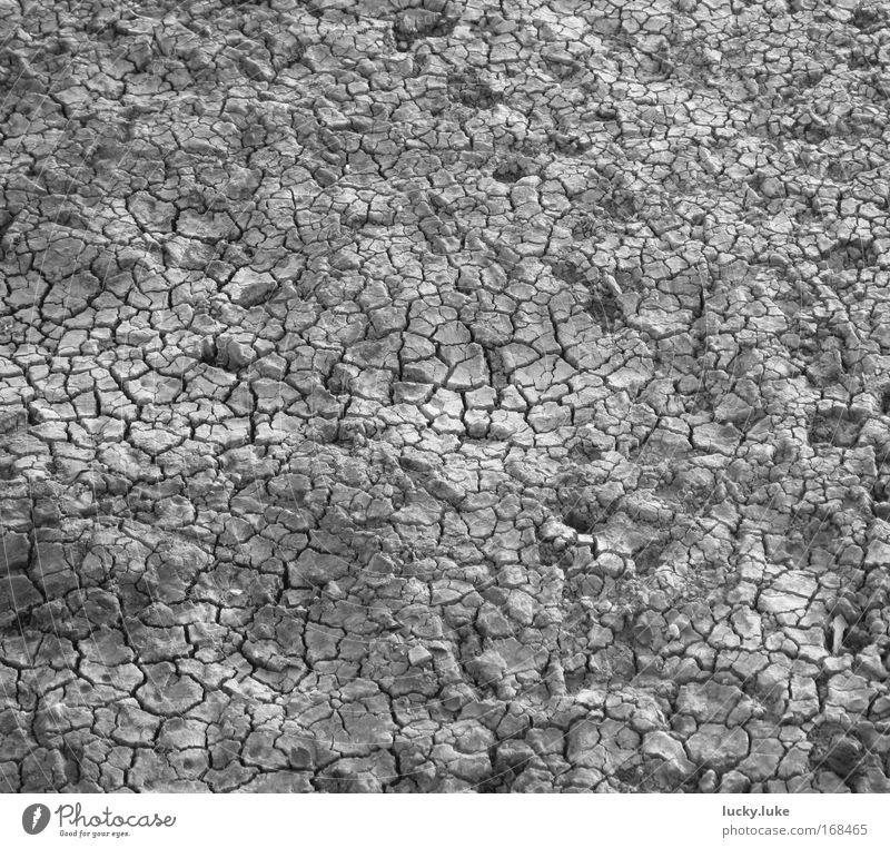 Ausgetrockneter Seegrund Natur grau See Erde trocken Durst Kruste