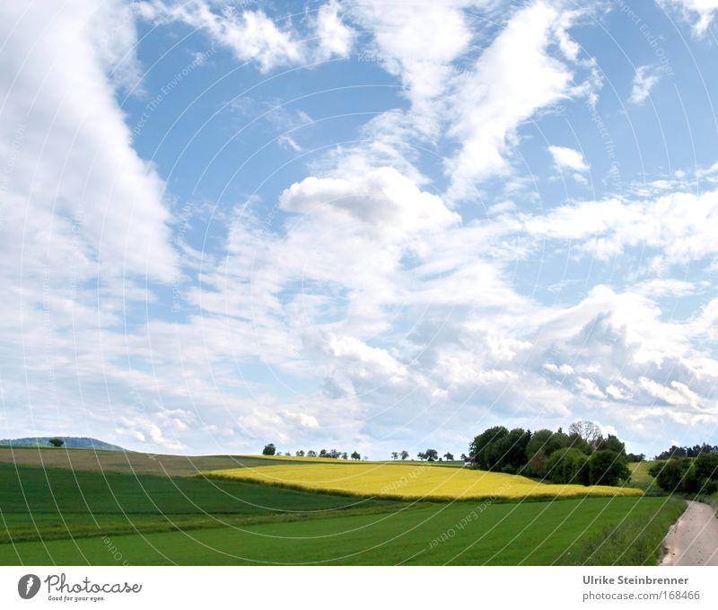 Weiter Wolkenhimmel über Rapsfeld und Wald im Frühling Farbfoto Außenaufnahme Menschenleer Tag Sinnesorgane Ausflug Umwelt Natur Landschaft Pflanze Luft Himmel