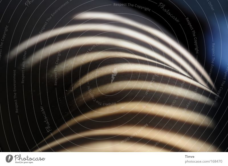 dark-striped 2 Farbfoto Gedeckte Farben Innenaufnahme Nahaufnahme Morgen Schwache Tiefenschärfe Körper Haut Erholung feminin Erotik schwarz Zebra Zebrastreifen