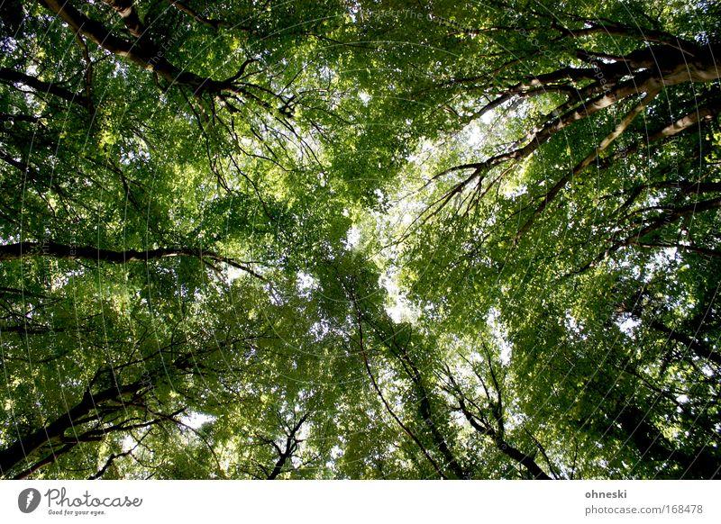 Sommerwald Natur Baum grün Pflanze Blatt Wald Landschaft Umwelt Ast natürlich Baumstamm