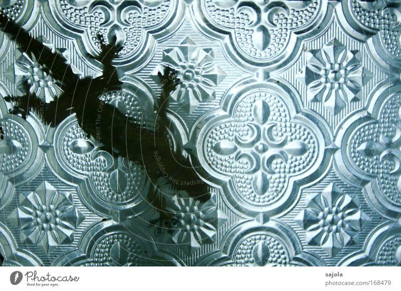 gecko hinter glas Tier Reptil Echsen Gecko Beine Schwanz Kopf 1 Glas hängen krabbeln warten Gelassenheit durchsichtig altmodisch Design Fenster Fensterscheibe