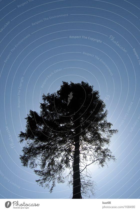 Sonnenblick Himmel Natur blau Baum Pflanze Sonne Sommer Einsamkeit schwarz Tod Holz Park Wachstum Schönes Wetter Ast Botanik