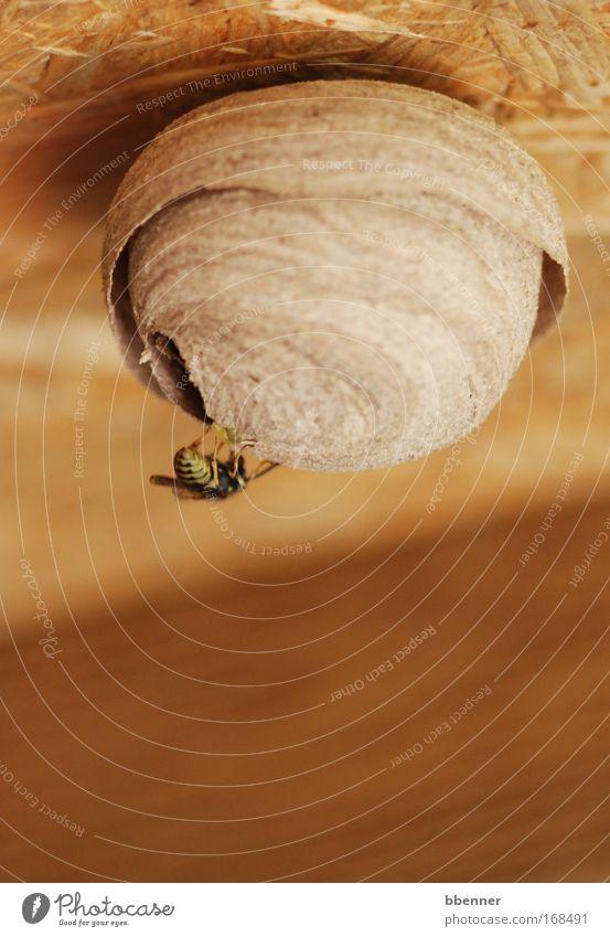 Schöner Wohnen Farbfoto Makroaufnahme Menschenleer Wohnung Hausbau Künstler Skulptur Natur Tier Wespen Wespennest 1 Holz bauen fliegen rund trocken Wärme braun