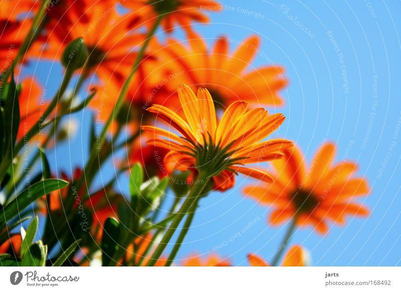 sunday Farbfoto Außenaufnahme Nahaufnahme Textfreiraum rechts Textfreiraum oben Hintergrund neutral Tag Sonnenlicht Schwache Tiefenschärfe Froschperspektive
