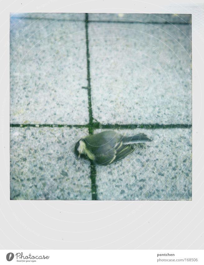 Toter Vogel auf Pflastersteinen. Tierschutz. Natur Straße Wege & Pfade Totes Tier 1 Beton fliegen tot Tod Flügel Feder Schnabel Traurigkeit grau hart Meisen