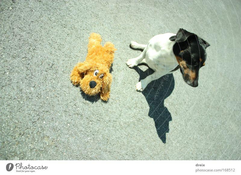 Dog On Asphalt Farbfoto Außenaufnahme Menschenleer Tag Schatten Vogelperspektive Tierporträt Wegsehen Hund 1 Stofftiere Erholung genießen hocken sitzen fest