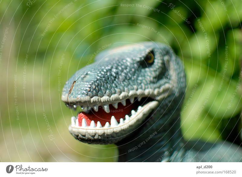 Tyrannosaurus rex Farbfoto Außenaufnahme Detailaufnahme Tag Schwache Tiefenschärfe Zentralperspektive Tierporträt Oberkörper Blick in die Kamera Spielen Umwelt