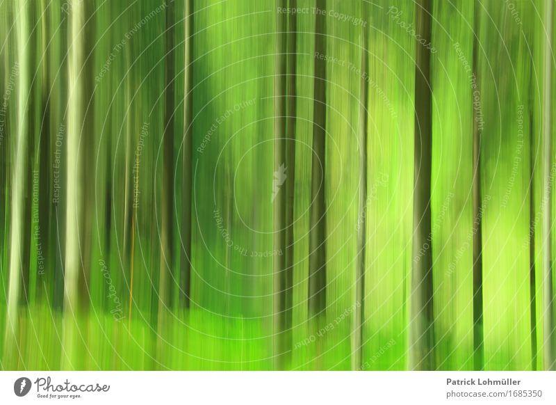 Frühlingsgrün im Schwarzwald Tourismus Ausflug Abenteuer Umwelt Natur Landschaft Pflanze Baum Gras Moos Wald Hinterzarten Baden-Württemberg Deutschland Europa
