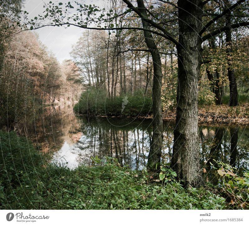 Still dahin Umwelt Natur Landschaft Himmel Baum Sträucher Blatt Wildpflanze Flussufer Spree Erholung stehen Wachstum ruhig Idylle Baumstamm Holz Baumrinde