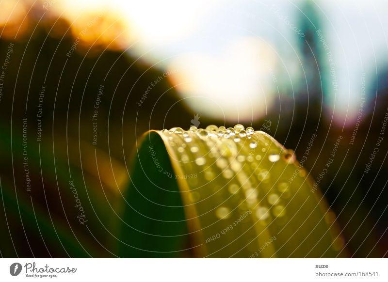 Farbfoto Natur Pflanze Blatt Leben Wiese Gefühle Gras träumen Park Landschaft glänzend Umwelt Wassertropfen ästhetisch Tropfen leuchten