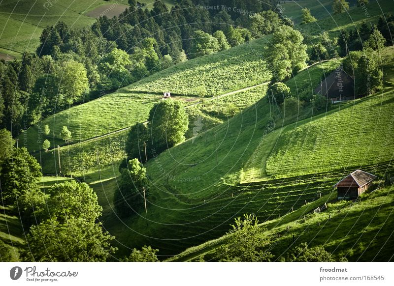 greenpeace schön Baum grün Haus Wiese Gras Zufriedenheit Gesundheit Umwelt ästhetisch Romantik authentisch Kitsch Schweiz Vergänglichkeit Alpen