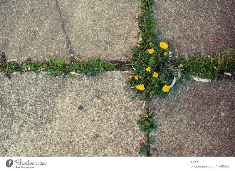 Kreuzung abstrakt Menschenleer Tag Kunstwerk Umwelt Natur Landschaft Pflanze Blume Löwenzahn Park Platz Straße Stein Beton Zeichen Wachstum authentisch Erfolg