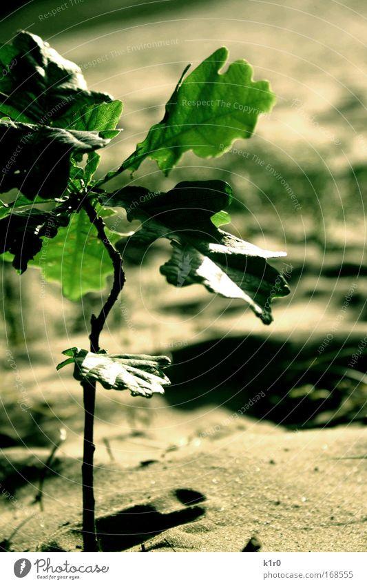 bäumchen Natur Baum grün ruhig Frühling Grünpflanze