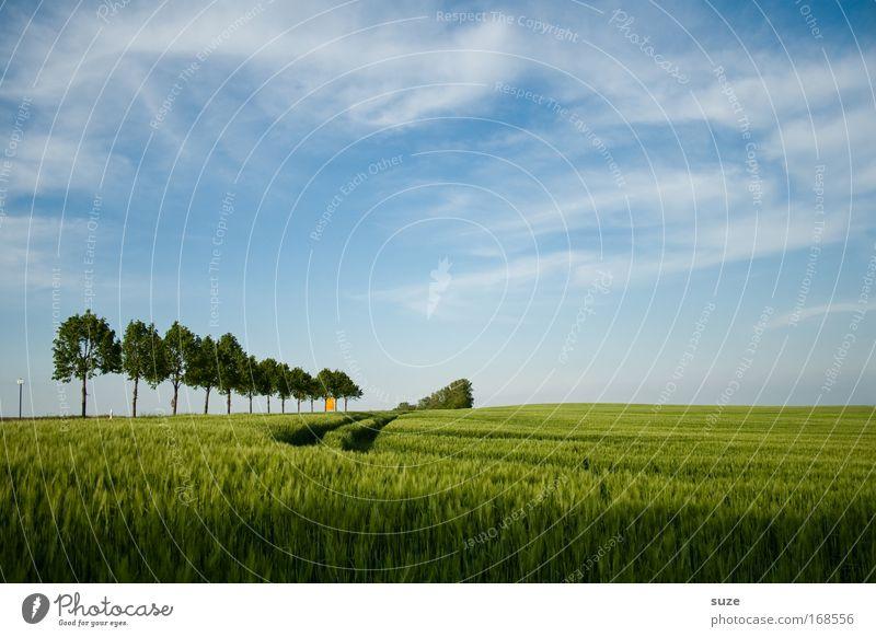 Baumgrenze Umwelt Natur Landschaft Pflanze Klima Schönes Wetter Gras Nutzpflanze Weizen Getreidefeld Feld Spuren Wachstum authentisch blau grün Landwirtschaft