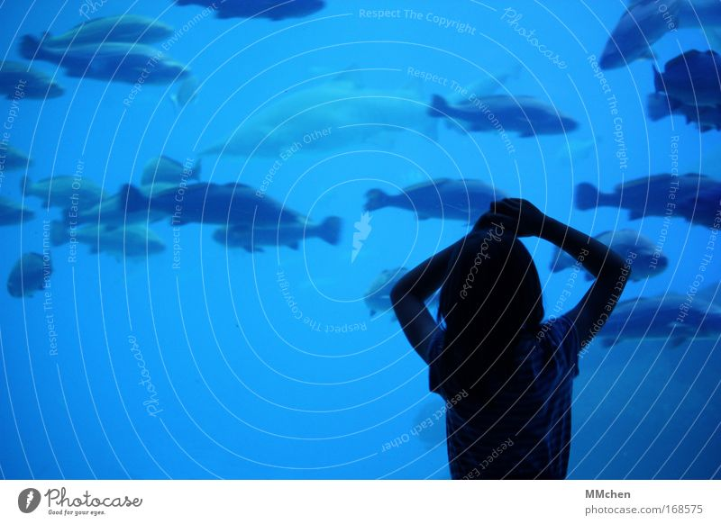 BeObachterin Mensch Kind Wasser blau Mädchen Ferien & Urlaub & Reisen Meer ruhig Tier Küste Kindheit Arme Ausflug Schwimmen & Baden Fisch bedrohlich