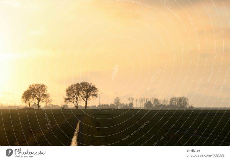 Stullenbrett Himmel ruhig Erholung Wiese träumen Landschaft Küste Feld frei Horizont Unendlichkeit Sonnenaufgang genießen