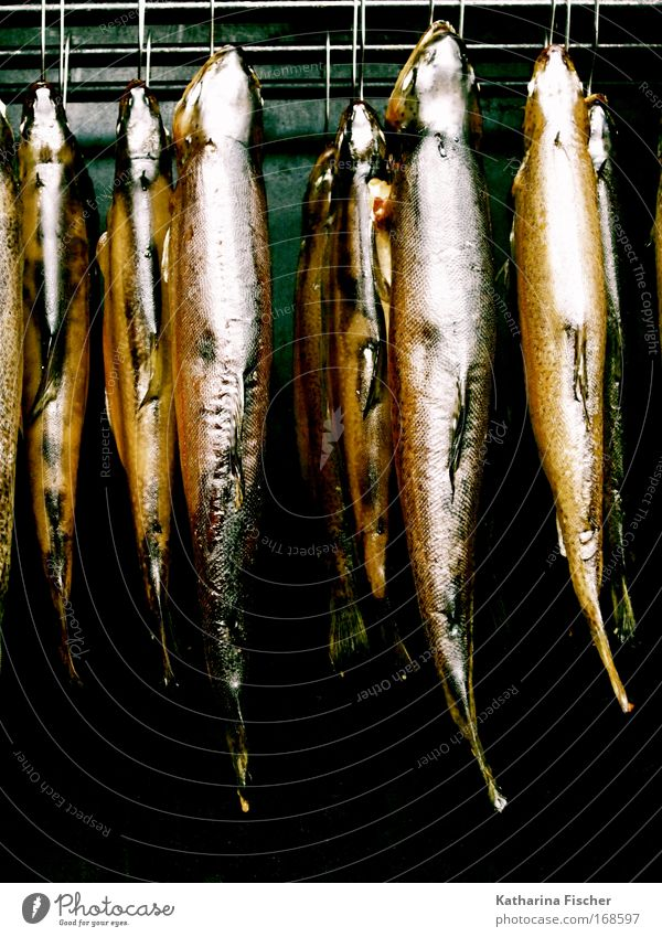 Erst mal abhängen... Tier Gesunde Ernährung Lebensmittel frisch Fisch Markt Fischereiwirtschaft Herd & Backofen Totes Tier Forelle geräuchert Protein Fischmarkt