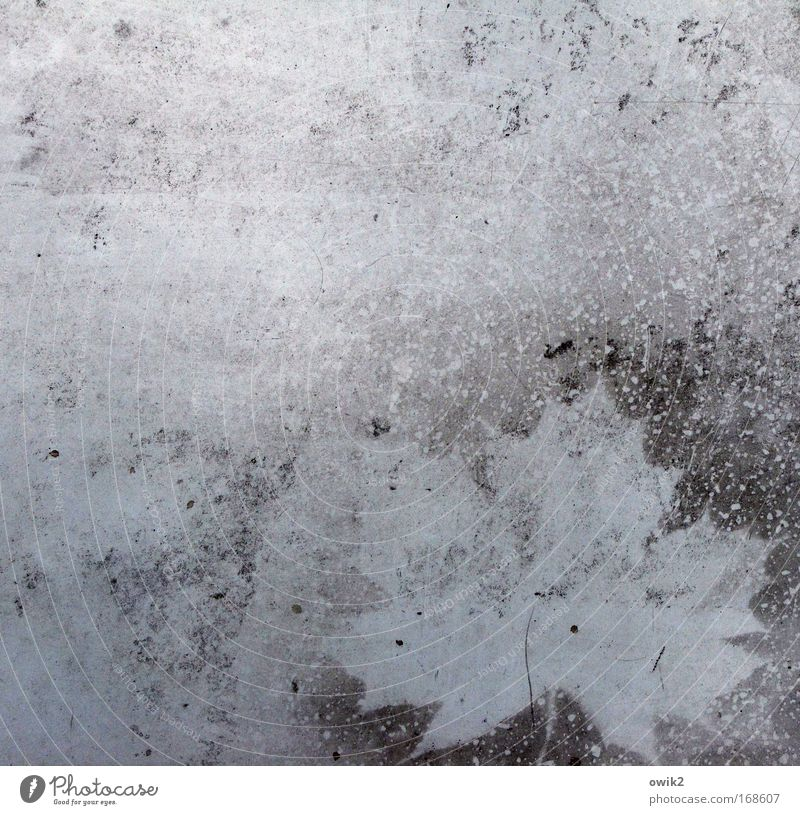 Herbstzeitlos Natur weiß blau Pflanze Blatt schwarz Tod grau träumen Traurigkeit Kunst Umwelt ästhetisch einfach Vergänglichkeit einzigartig