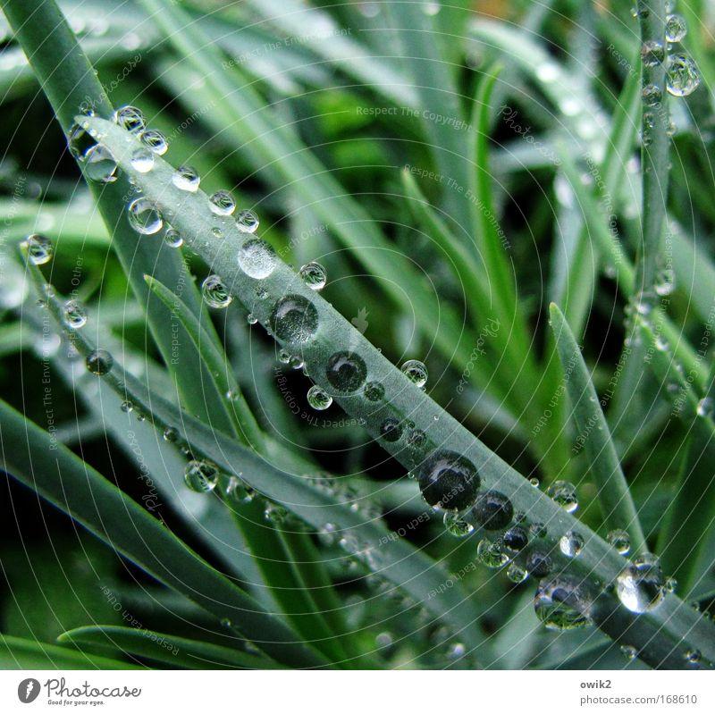 Der Duft des Regens Natur schön grün Pflanze Gras glänzend Wetter elegant Umwelt Wassertropfen nass frisch ästhetisch Wachstum Sträucher