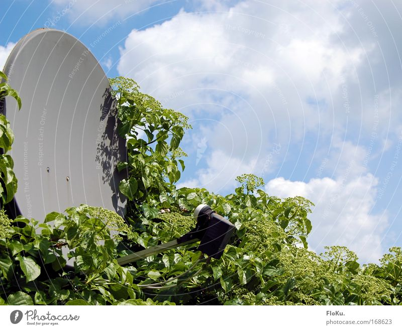 Salatschüssel Natur Himmel grün blau Blatt Wolken grau Umwelt Zukunft Technik & Technologie Fernseher Kommunizieren Fernsehen Telekommunikation Gegenteil Grünpflanze