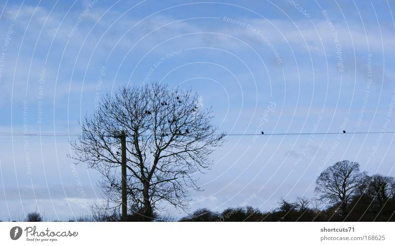 die vögel Natur Himmel Baum Vogel geduldig hocken