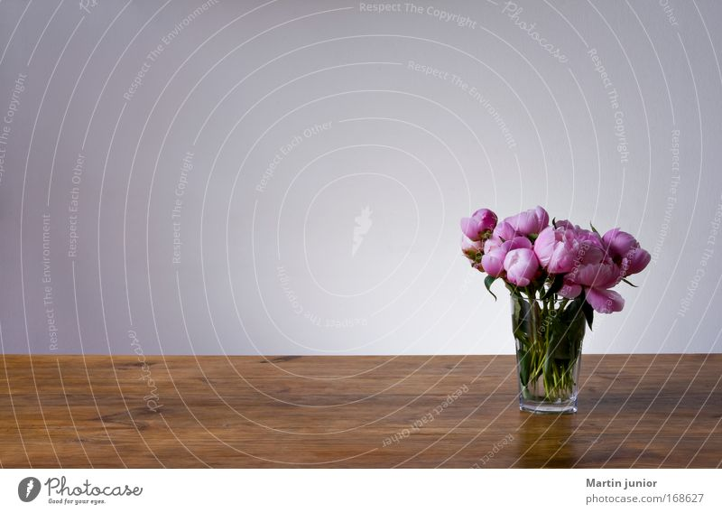 Dufte, Textfreiraum! Natur schön Blume Pflanze Möbel Blüte Holz grau braun Glas rosa Tisch Rose ästhetisch Licht