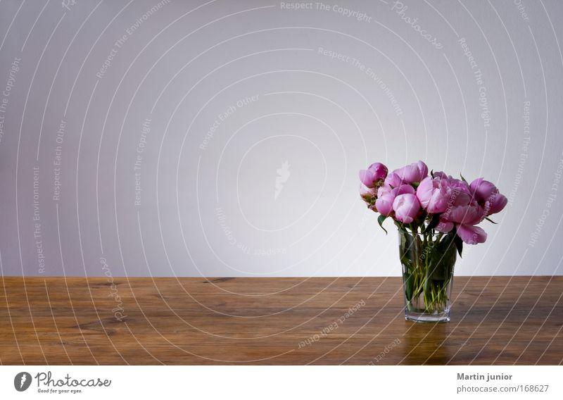 Dufte, Textfreiraum! Natur schön Blume Pflanze Möbel Blüte Holz grau braun Glas rosa Tisch Rose ästhetisch Licht Duft
