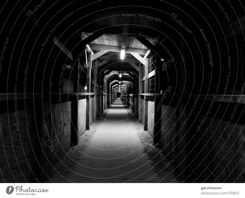 Tunnel Nacht Langzeitbelichtung Architektur Licht