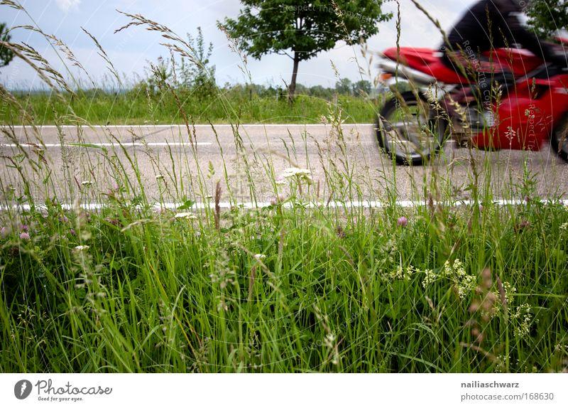 Vorbeigefahren ... Mensch Natur Himmel Baum Ferien & Urlaub & Reisen Wolken Gras Frühling Landschaft Straßenverkehr maskulin Umwelt Motorrad Verkehrsmittel