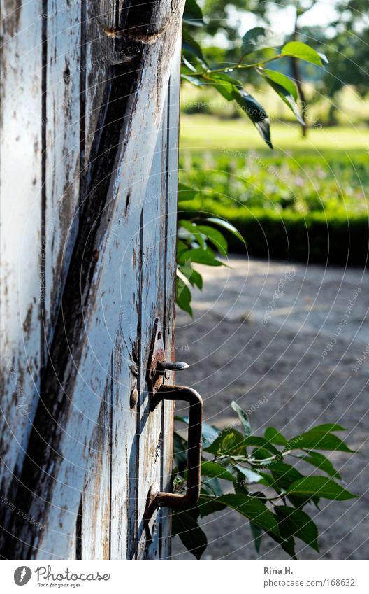 Ausblick grün blau Sommer Erholung Garten Glück Zufriedenheit Stimmung Tür frisch Fröhlichkeit Romantik Aussicht Neugier verfallen Erwartung