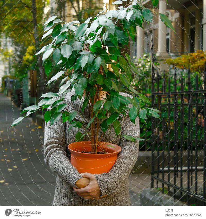wo bin ich Mensch feminin Junge Frau Jugendliche 18-30 Jahre Erwachsene Pflanze Baum Blatt Grünpflanze Blumentopf Topfpflanze stehen tragen grün Verantwortung