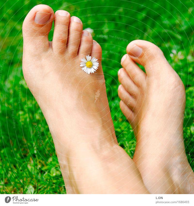 Gänseblümchen Mensch Natur Jugendliche nackt Pflanze Sommer schön Junge Frau Blume Erholung ruhig 18-30 Jahre Erwachsene Blüte Frühling Wiese