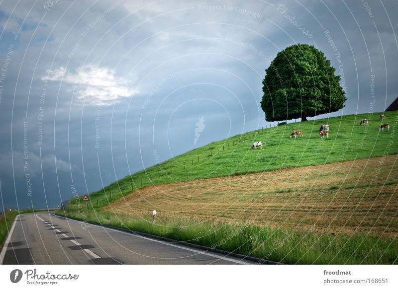 leer Farbfoto Außenaufnahme Menschenleer Textfreiraum links Dämmerung Weitwinkel Umwelt Natur Landschaft Pflanze Tier Sommer Klimawandel schlechtes Wetter Baum